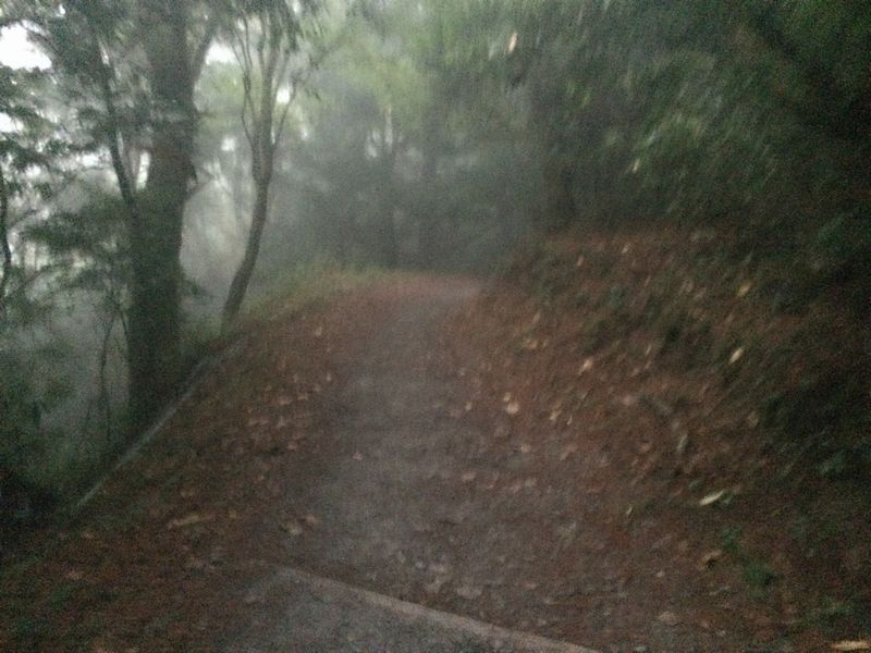 暗くなり、霧がかかってきた