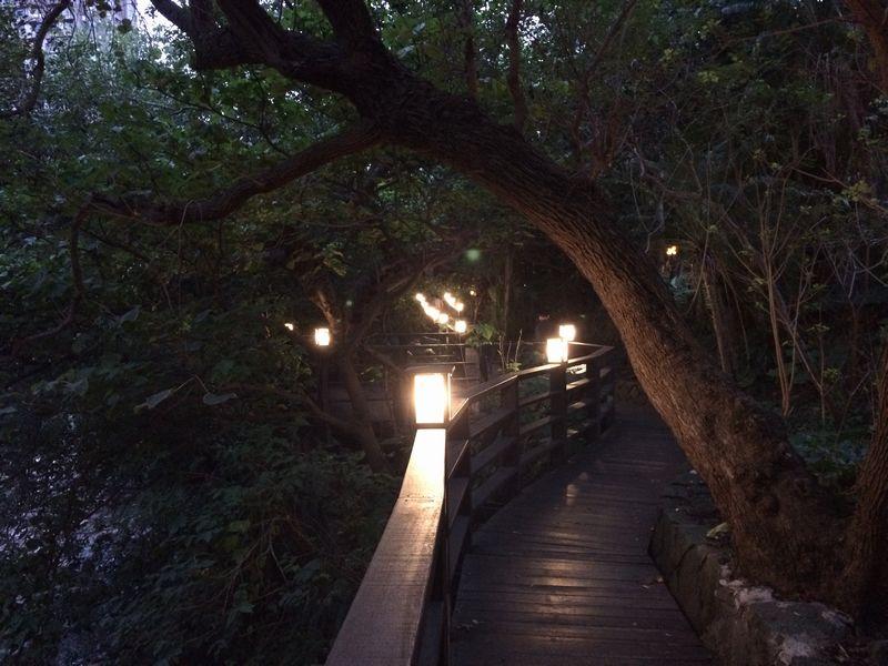 温泉公園の遊歩道