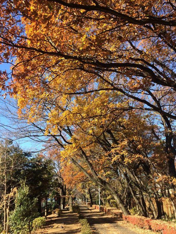 水道道路はまだ秋の景色