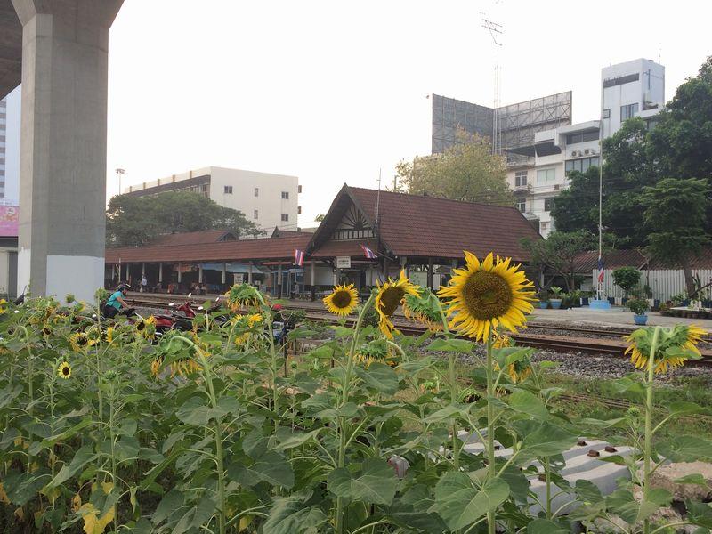 ひまわりの咲くクロンタン駅