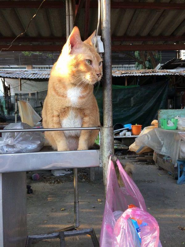 駅構内雑貨店のネコ
