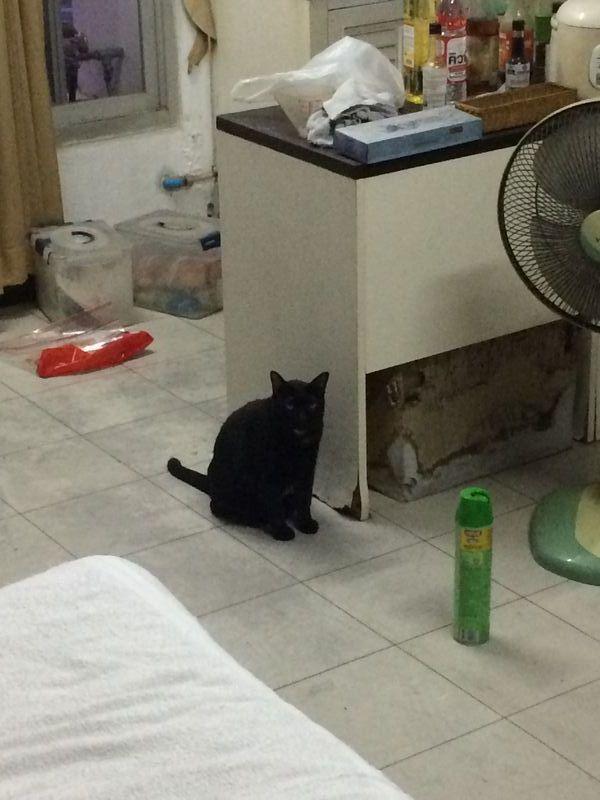 ネコは留守番