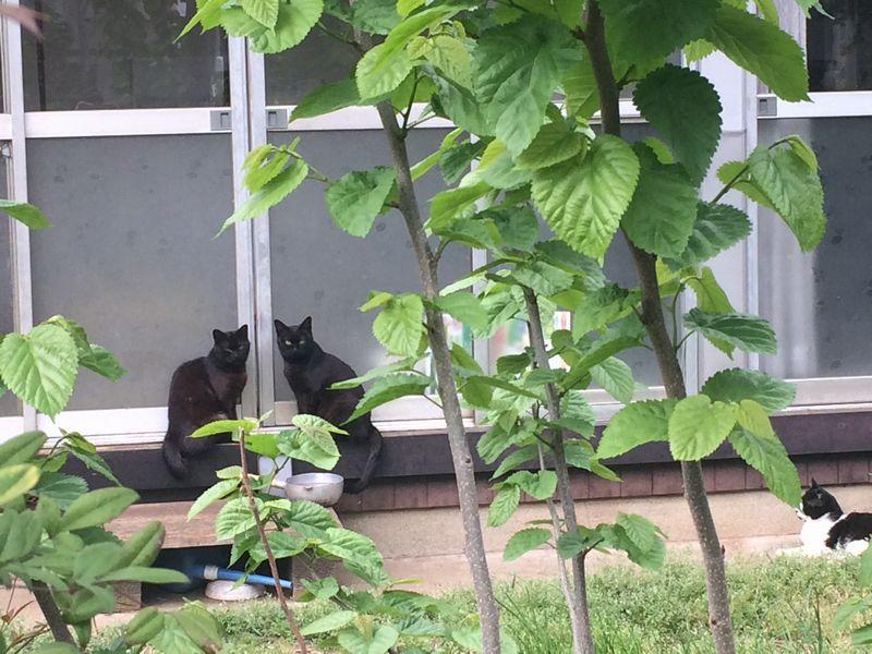 二匹の黒猫