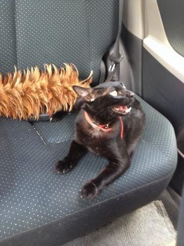 ネコも暑い