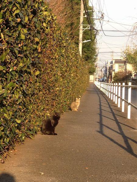 小春日和のネコ