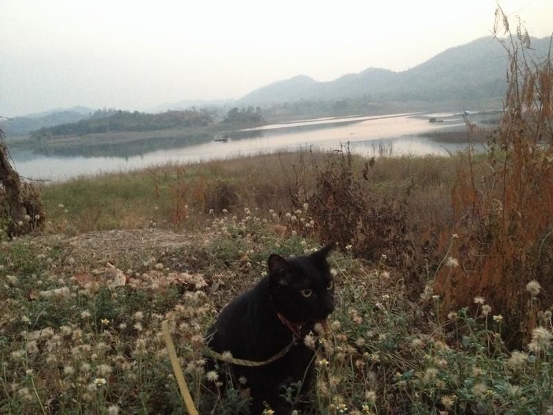 続・ネコと湖