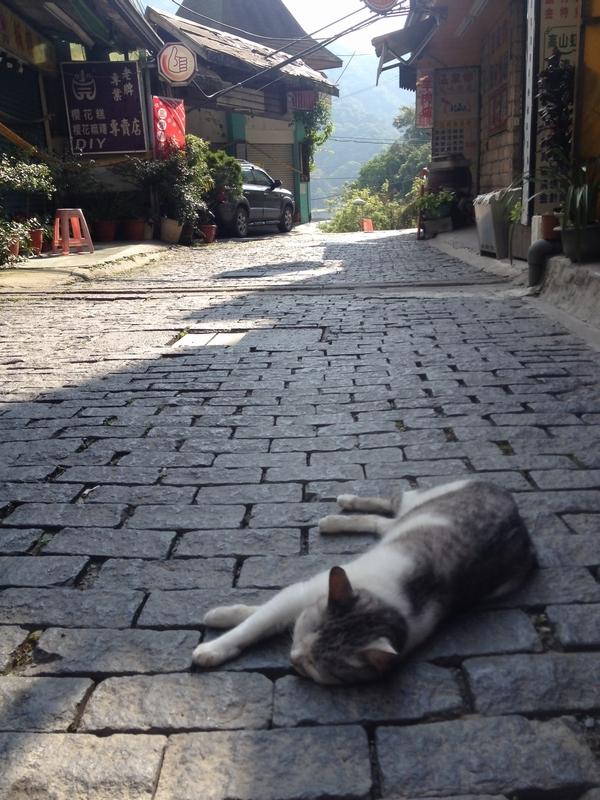 蘆山温泉街のメインストリートで昼寝中のネコ
