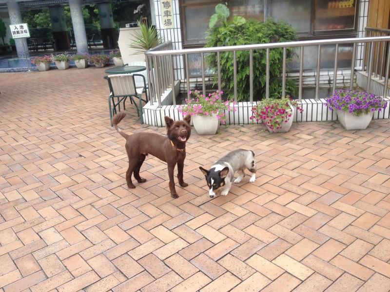 蘆山園大飯店の犬たち