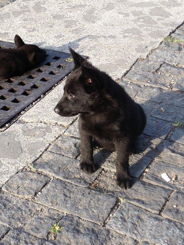 温泉の子犬
