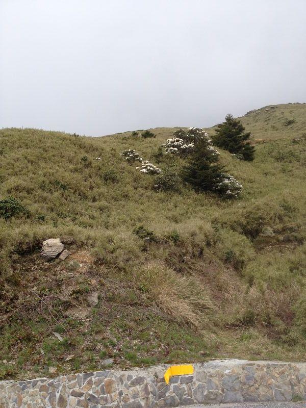 シャクナゲの咲く斜面