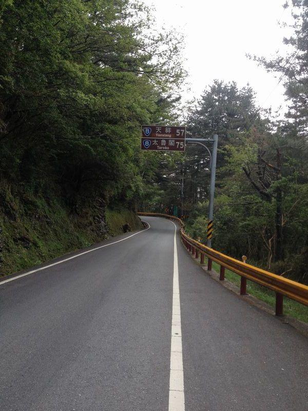 原生林の中の一本道
