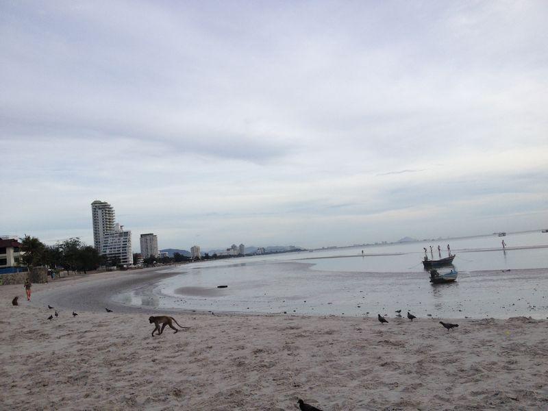 サルの遊ぶビーチ