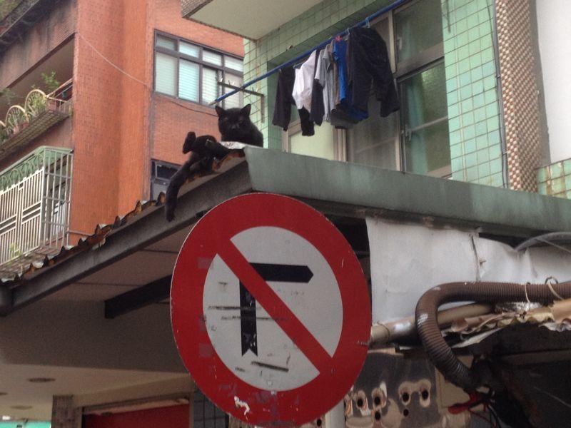 屋根に黒猫
