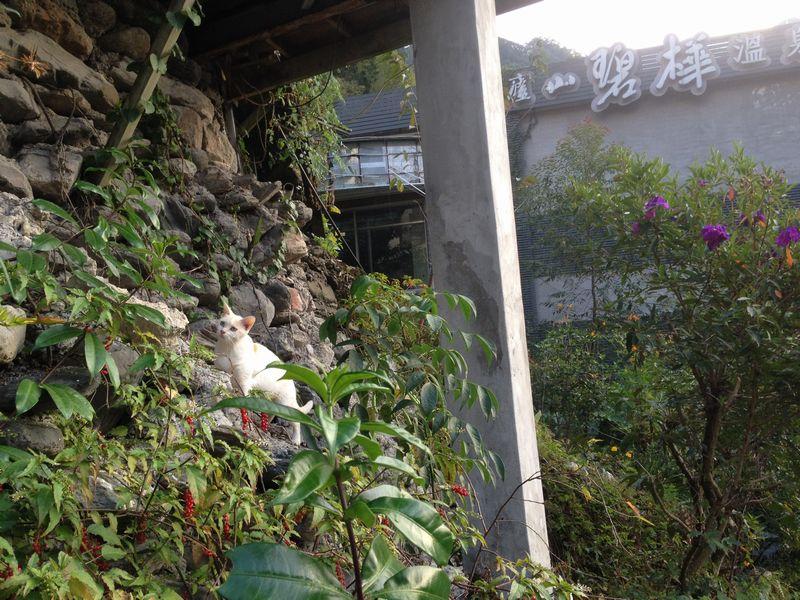 碧華荘前の斜面にいたネコ