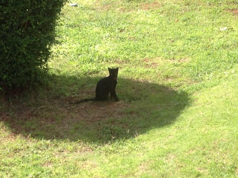 船着き場の黒ネコ