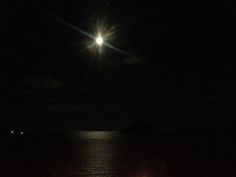 プラチュアップも月夜
