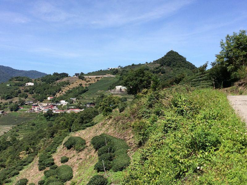 急な斜面は茶畑