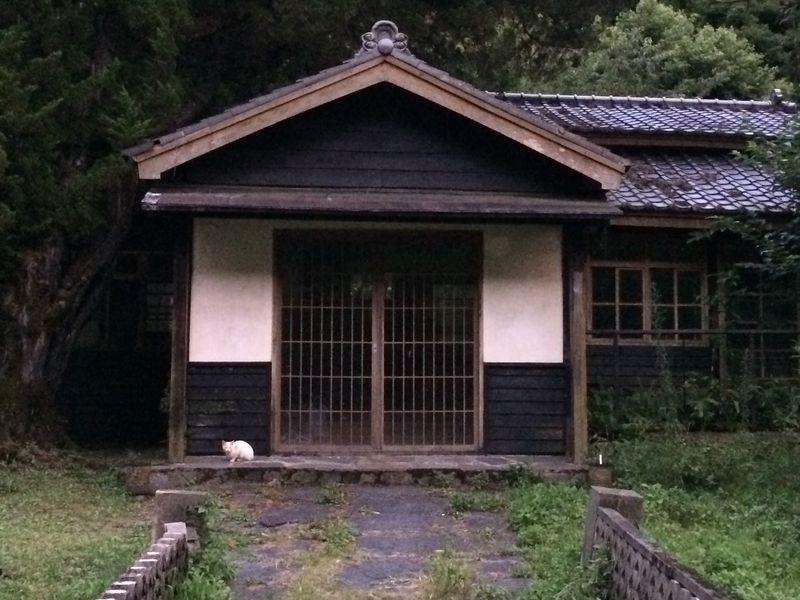 旧警光山荘の前で見かけたネコ