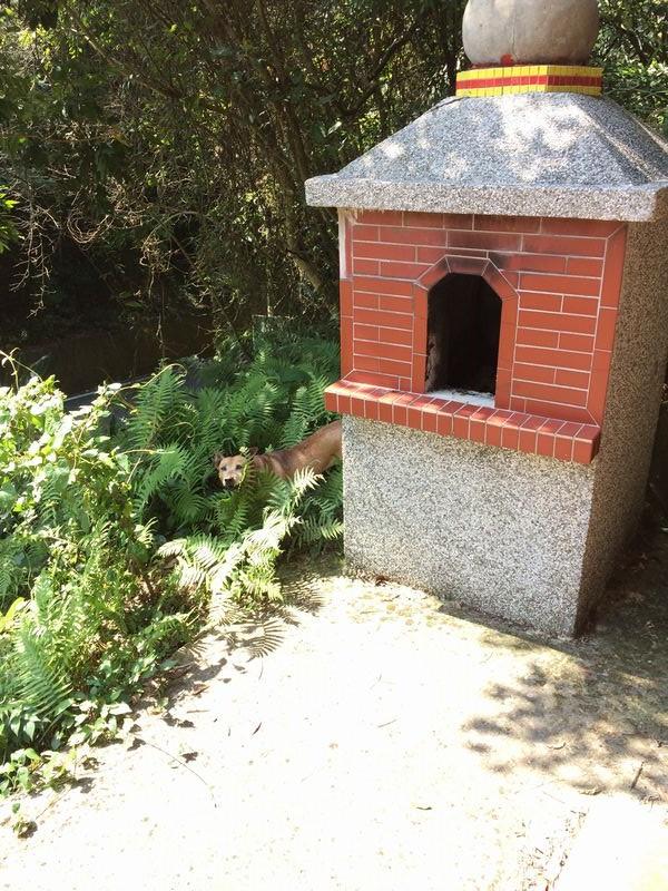 遠航空難紀念亭の犬