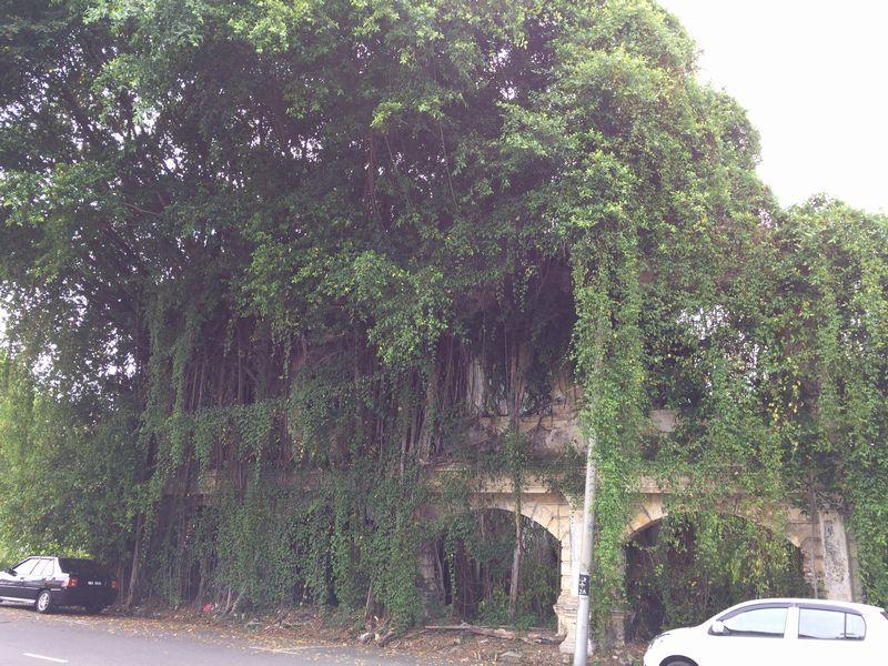 怪獣のように建物を飲み込む植物