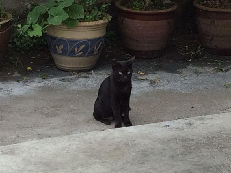 漁村の黒猫