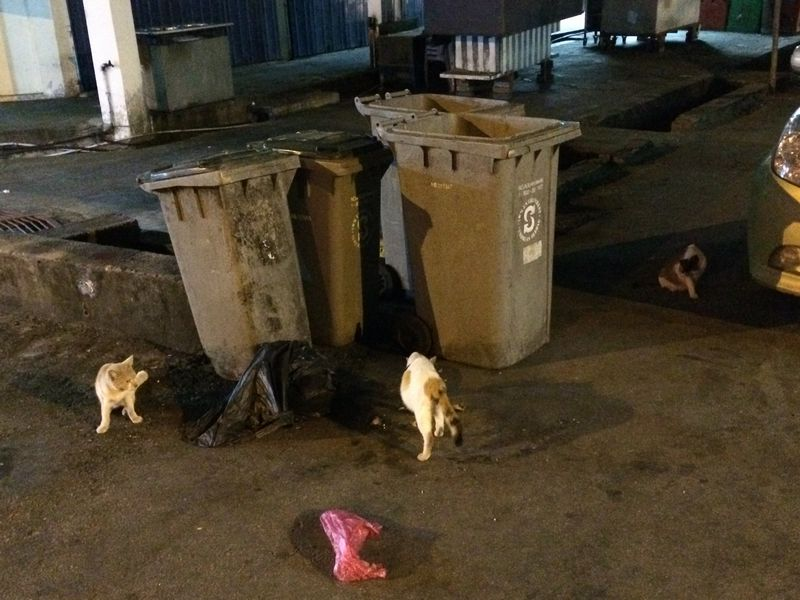 ゴミ箱の周りで猫たちが徘徊
