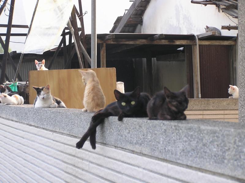 清流のネコたち