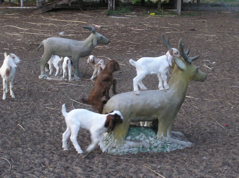 シカに登る山羊